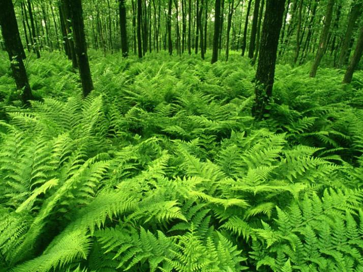 green-ferns