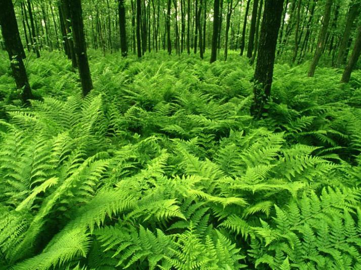 green-ferns