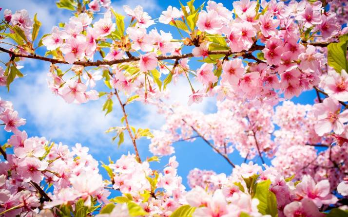 Beautiful-Spring-Flowers-HD-Wallpaper